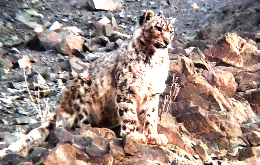 Snow Leopard Trek with Camping (2020)