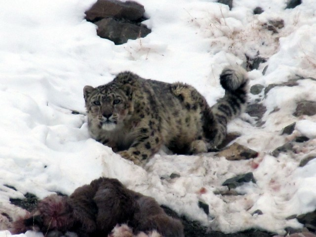 Snow Leopard Trek with Homestay(2020)